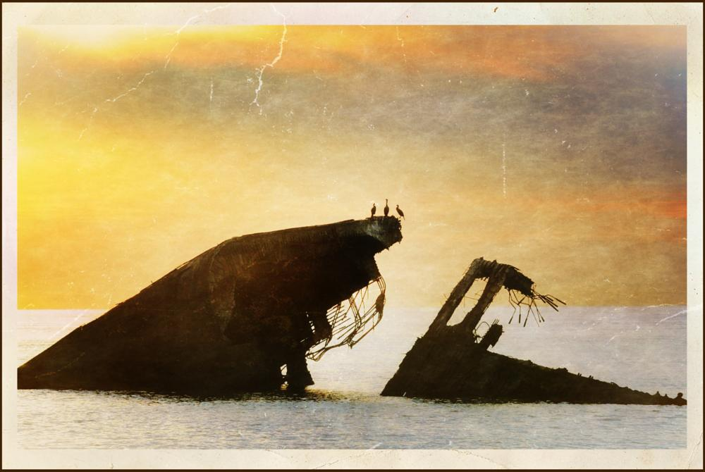 Photo in Fine Art #ship wreck #birds #cape may point #sunset