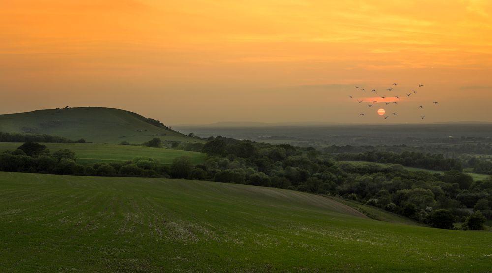 Photo in Random #sunset #sun #field #nature