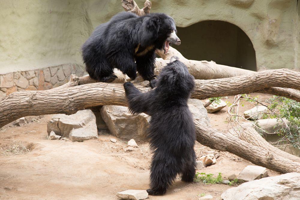 Photo in Random #zoo #bear