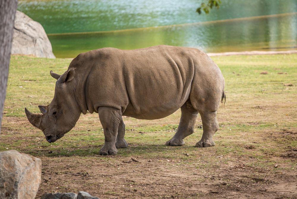 Photo in Random #rhino #zoo