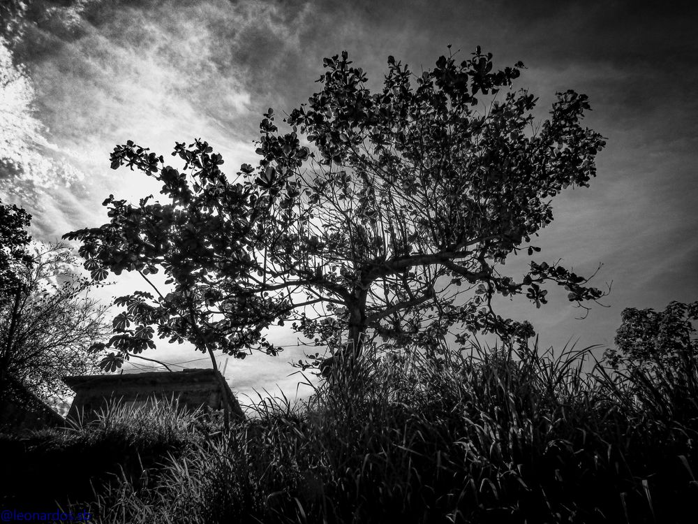 Photo in Black and White #christmas #black #white #tree #house #blackandwhite #sky #clouds #leaves #black and white