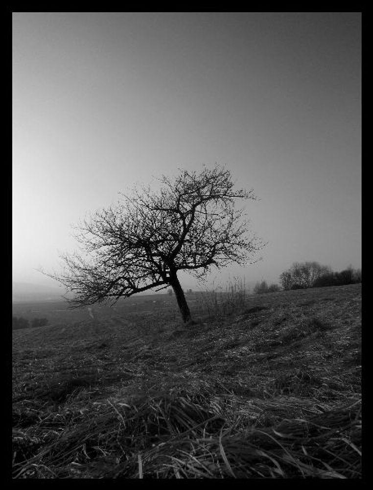 Photo in Random #strom #tree