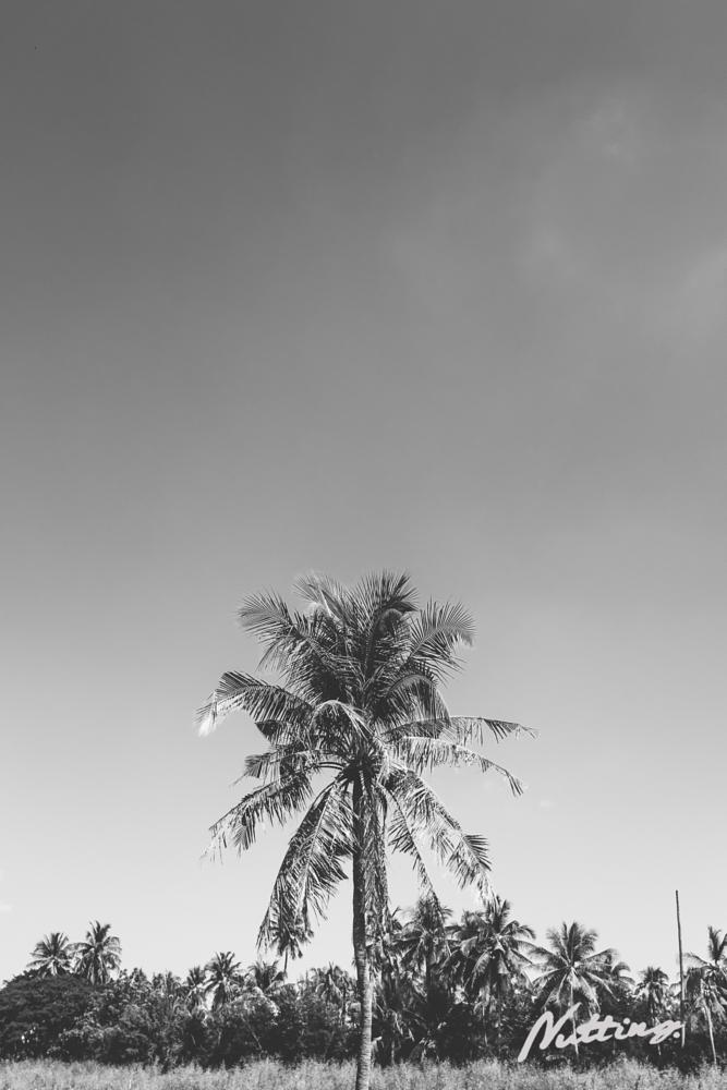 Photo in Nature #coconut #tree #bangkok #thailand #b&w #blackandwhite #monochrome #minimalist #nature #natural #photoshoot #photo #fujifilm #fuji #x100t #black
