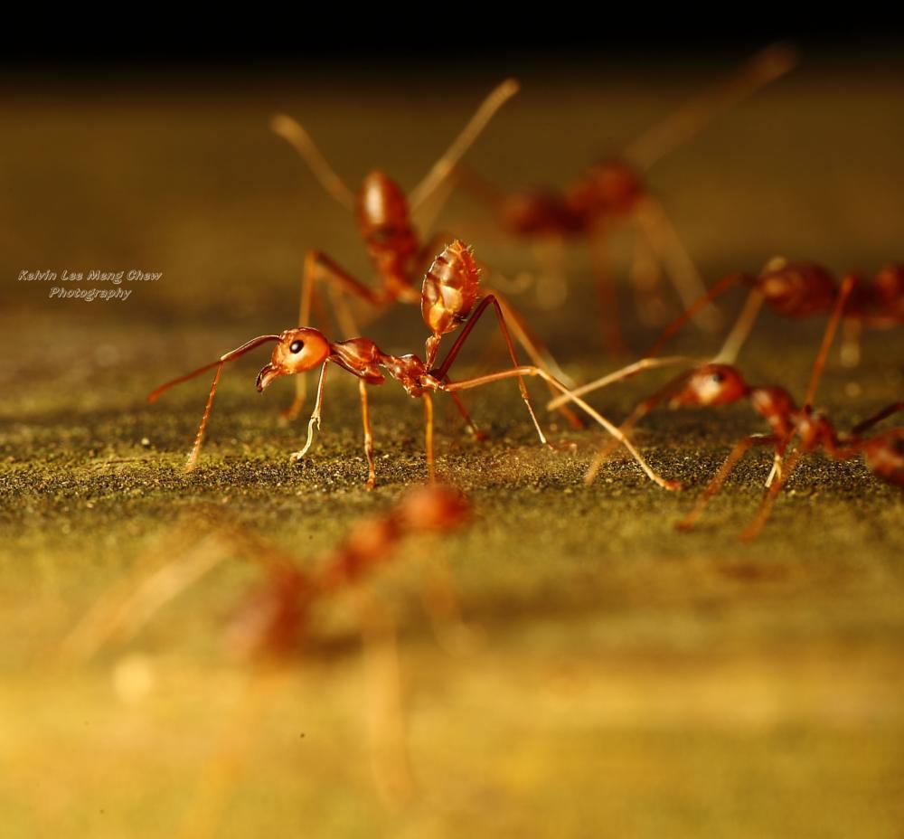 Photo in Macro #nature #macro #ant