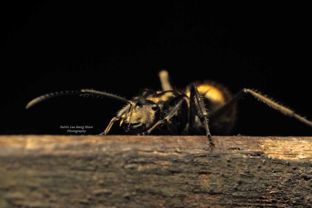 Photo in Macro #ant #nature #macro