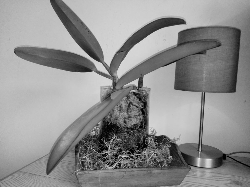 Photo in Black and White #blackandwhite #stilllife #indoors #leafs #glass #monochrome #lamp #plant #orchid