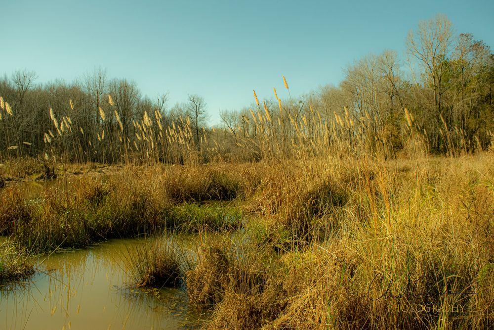 Photo in Random #creek #water #pond #grass #weed #weeds #sky #trees #tree