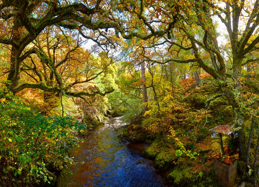 Photo in Landscape #landscapes #autumn #beauty in nature #nature #trees #colourful #sunshine #water #reflections