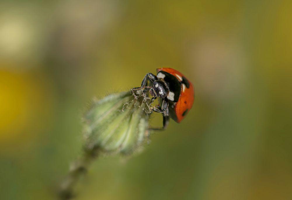 Photo in Macro #insects #macro #nature #wildlife