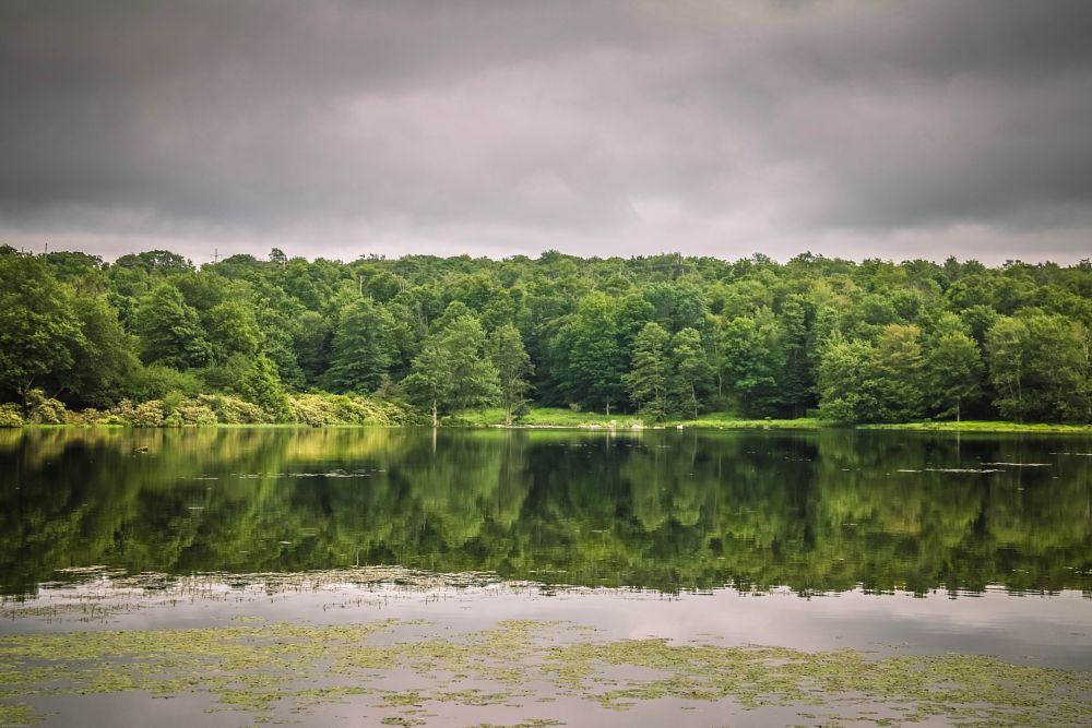 Photo in Landscape #reflections #lake jamie #lake #water #trees #roland r kemler photography