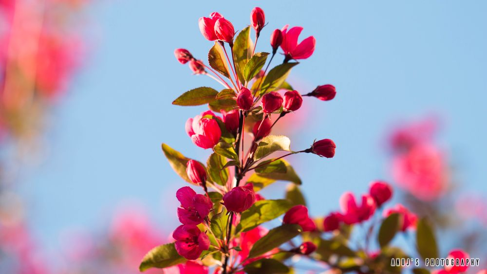 Photo in Nature #blooming #buds #nature