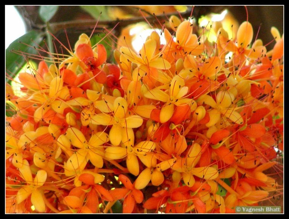 Photo in Random #of #flower #ashok
