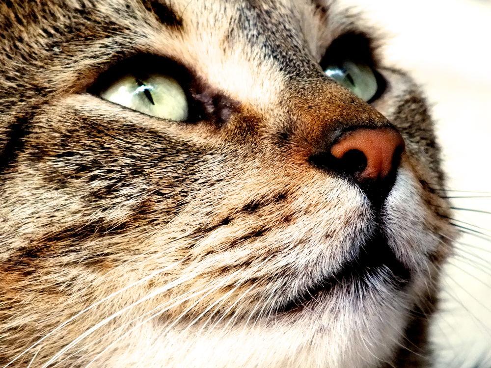 Photo in Animal #cat #cute #baby #heaven #green #eyes #beautiful