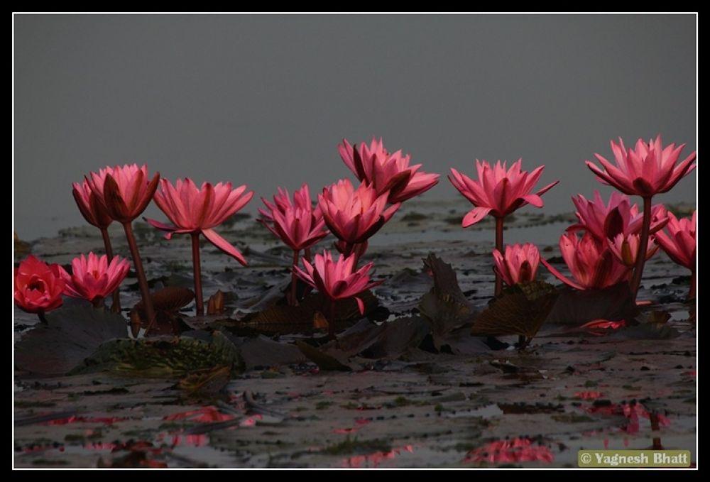 Photo in Random #water #lili