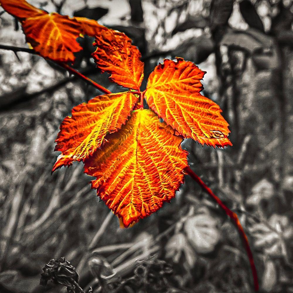 Photo in Nature #autumn #leaf