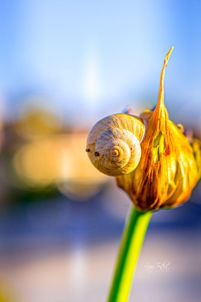 Photo in Macro #nature #snail #macro #closeup
