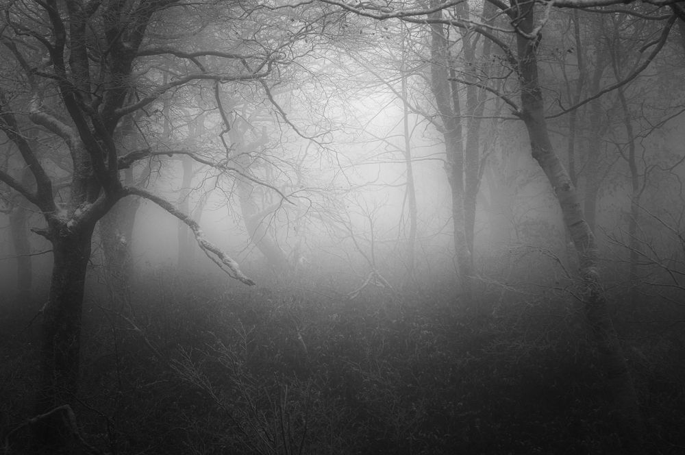 Photo in Random #mist #fog #forest #tree #nature #ypa2013
