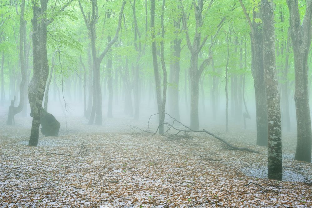 Photo in Nature #mist #fog #forest #green #snow #tree #japan #ypa2013