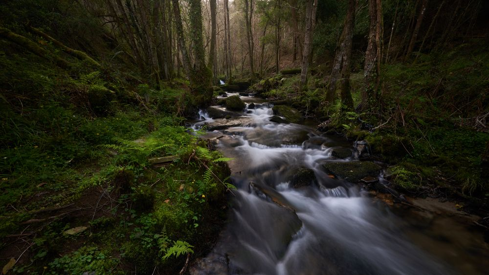 Photo in Random #forest #river #naturephotography