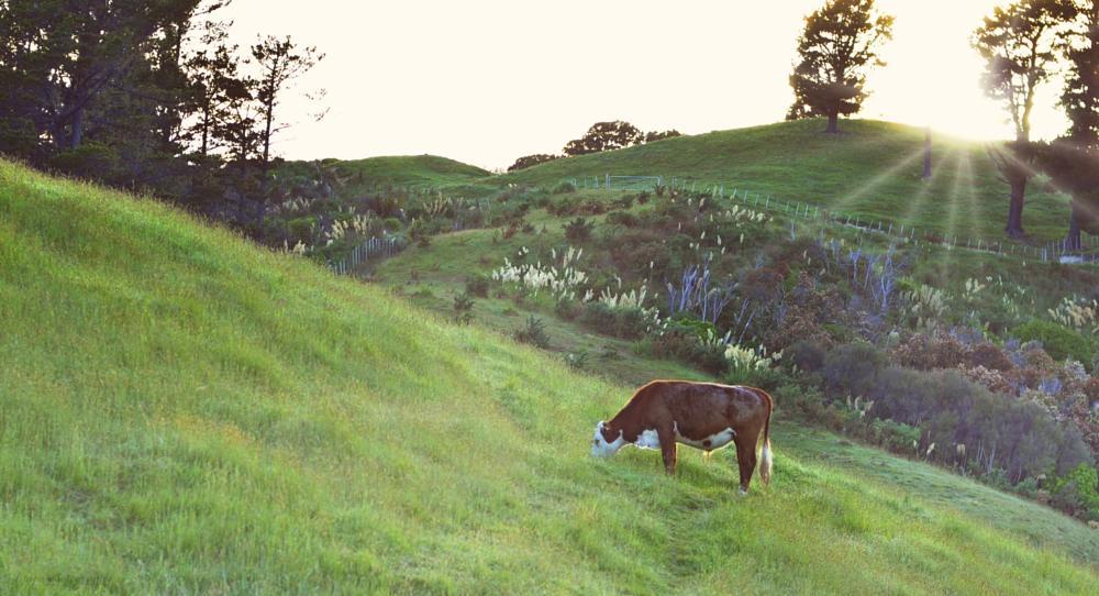 Photo in Landscape #cow #good morning #sunrise #birthday