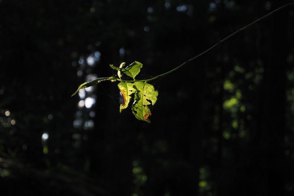 Photo in Nature #leaf #sunlight #梅谷