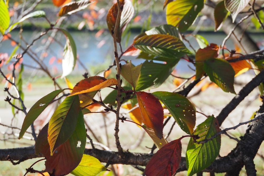Photo in Nature #autumn #rhythum #leaves #rhythum of leaves #colored
