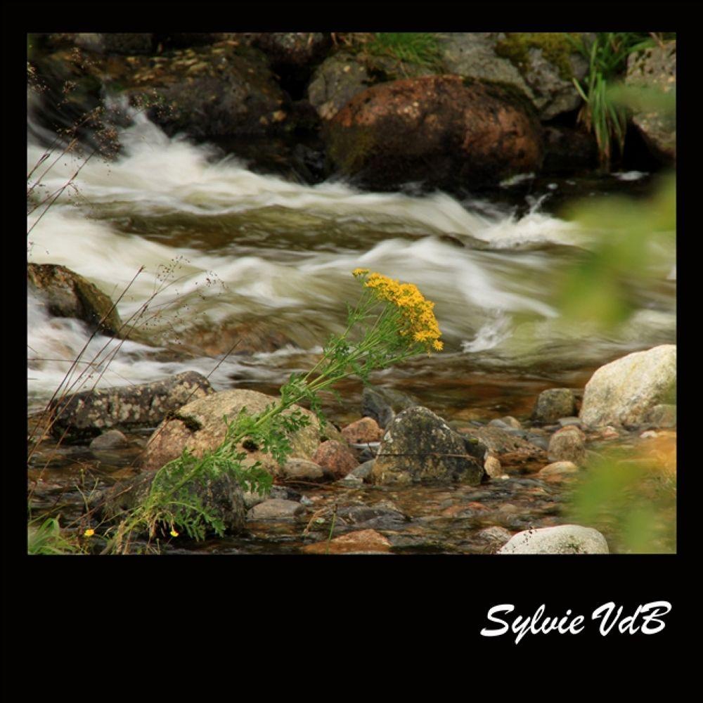 Photo in Random #downstream