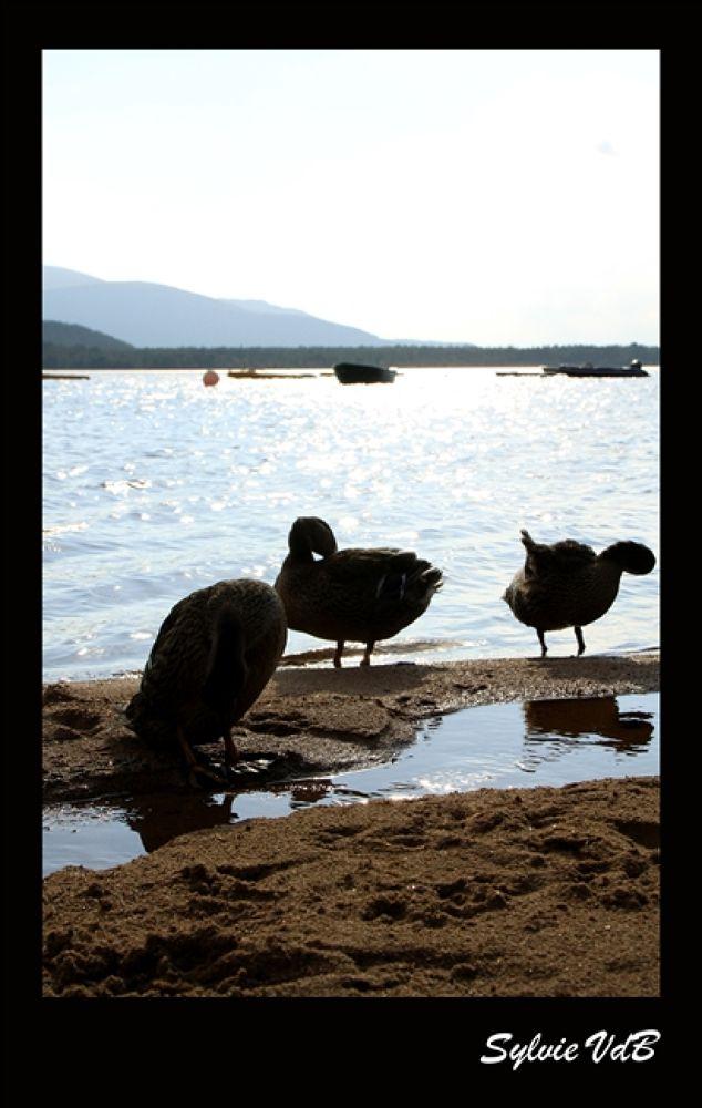 Photo in Random #duck #tales