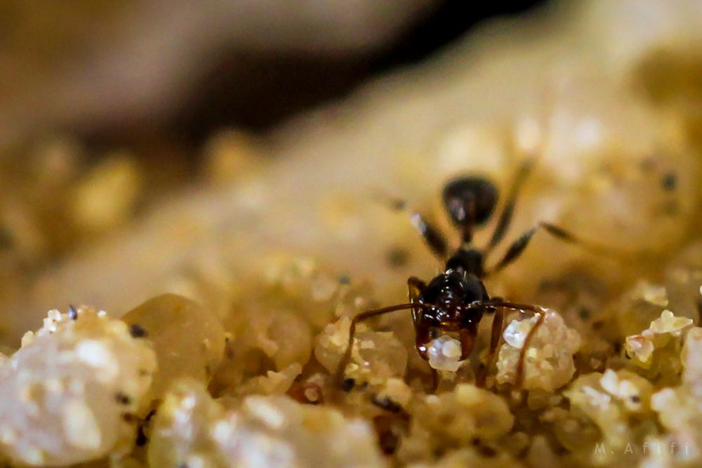 Photo in Macro #ants #ant's home #sand #macro #insect