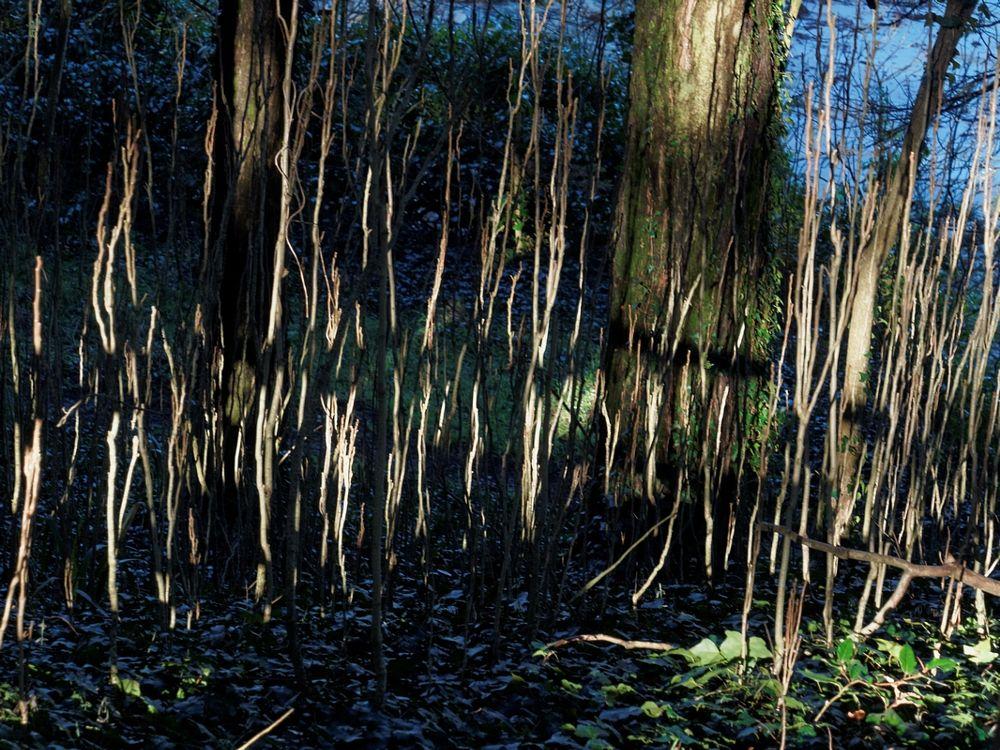 Photo in Nature #sous-bois #ombre #lumière