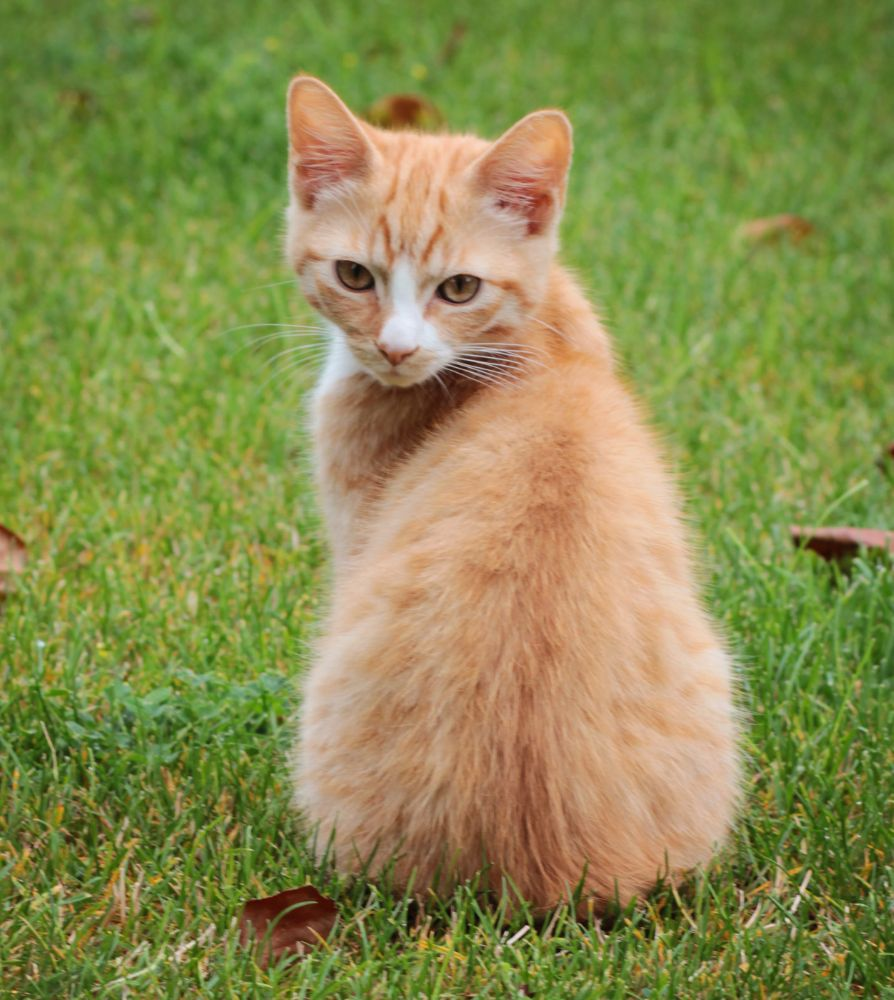 Photo in Animal #kittens #cats #ginger