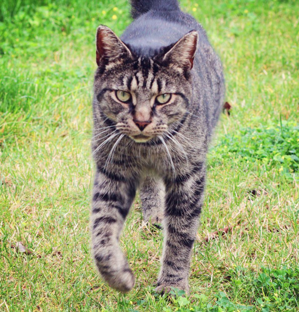 Photo in Animal #cat #animal #portrait