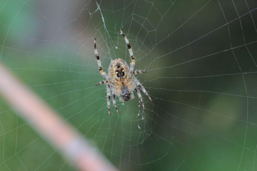 Photo in Macro #spider #macro #web #closeup