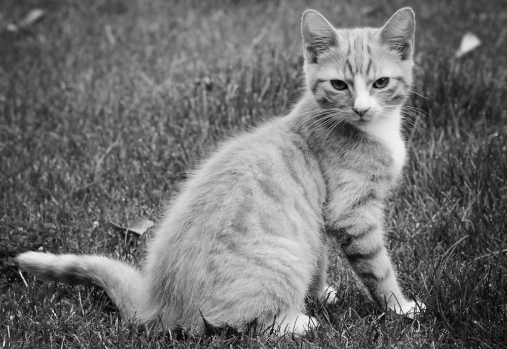 Photo in Animal #kitten #cat #portrait #cute #handsome