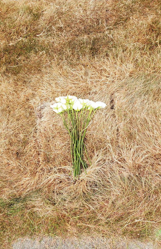 Photo in Random #roses #grave #funeral #square #grass #white #cemetery #loss #love
