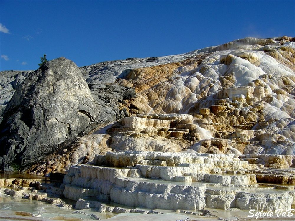 Photo in Random #yellowstone #np