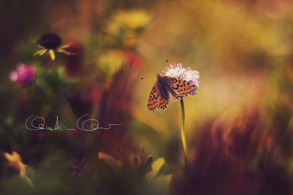 Photo in Macro #butterfly #macro #flowers