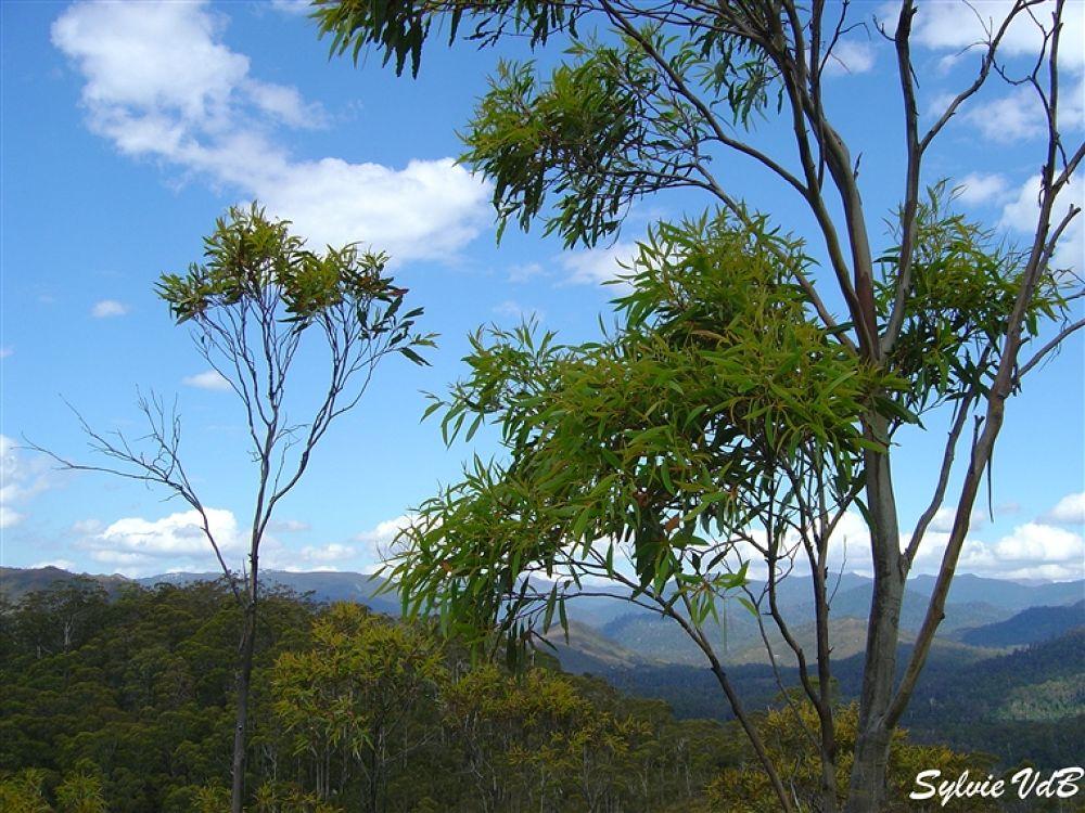Photo in Random #trees #tassie