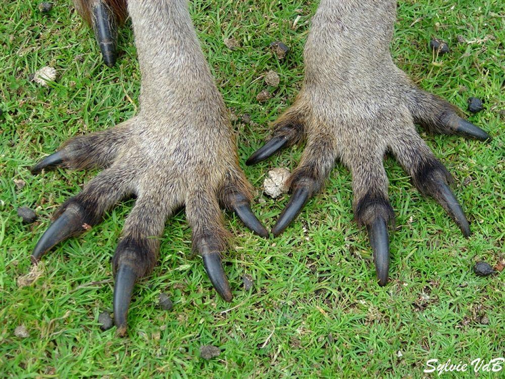 Photo in Random #kanga #paws