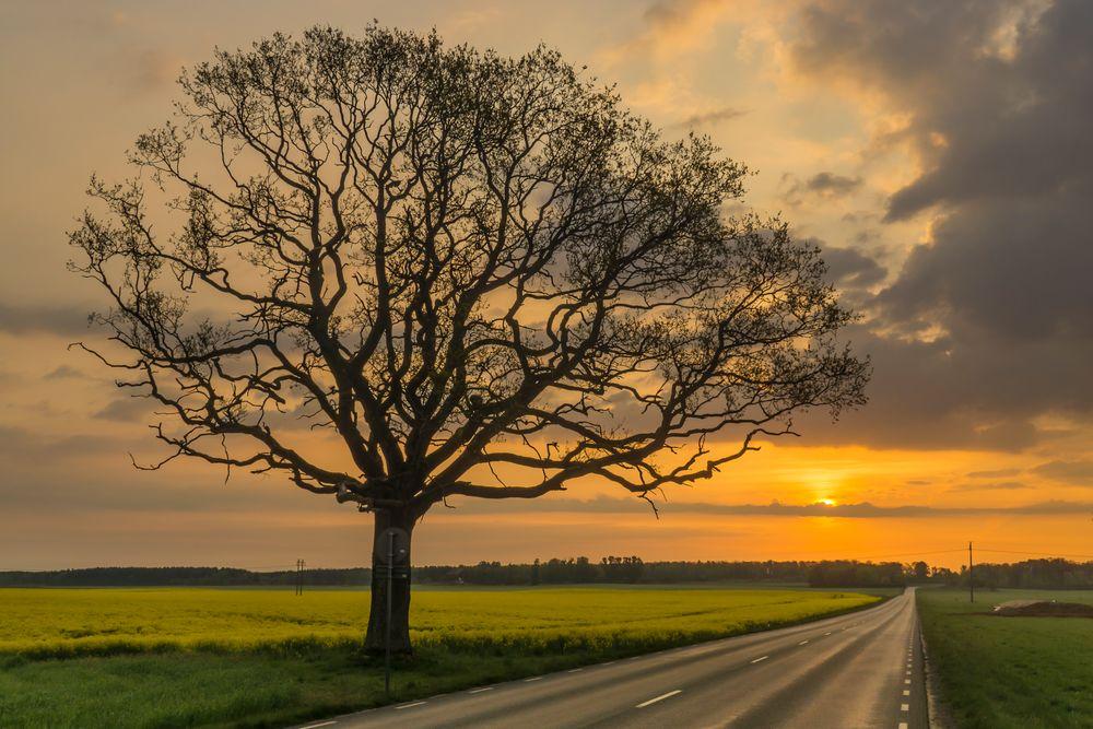 Photo in Random #golden hour #sunrise #sweden #tree #road #sun