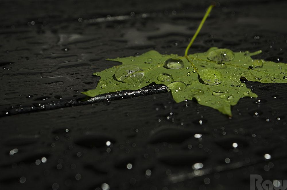 Photo in Random #leaf #green #ypa2013