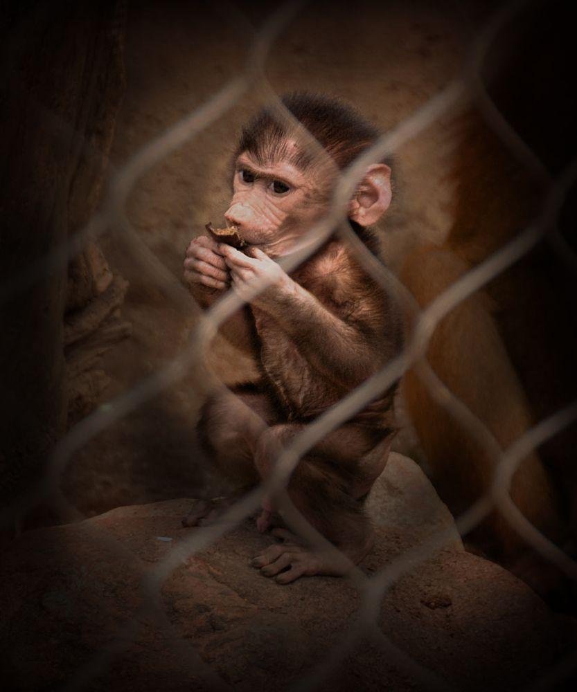 Photo in Animal #monkey #baby #zoo #mammal