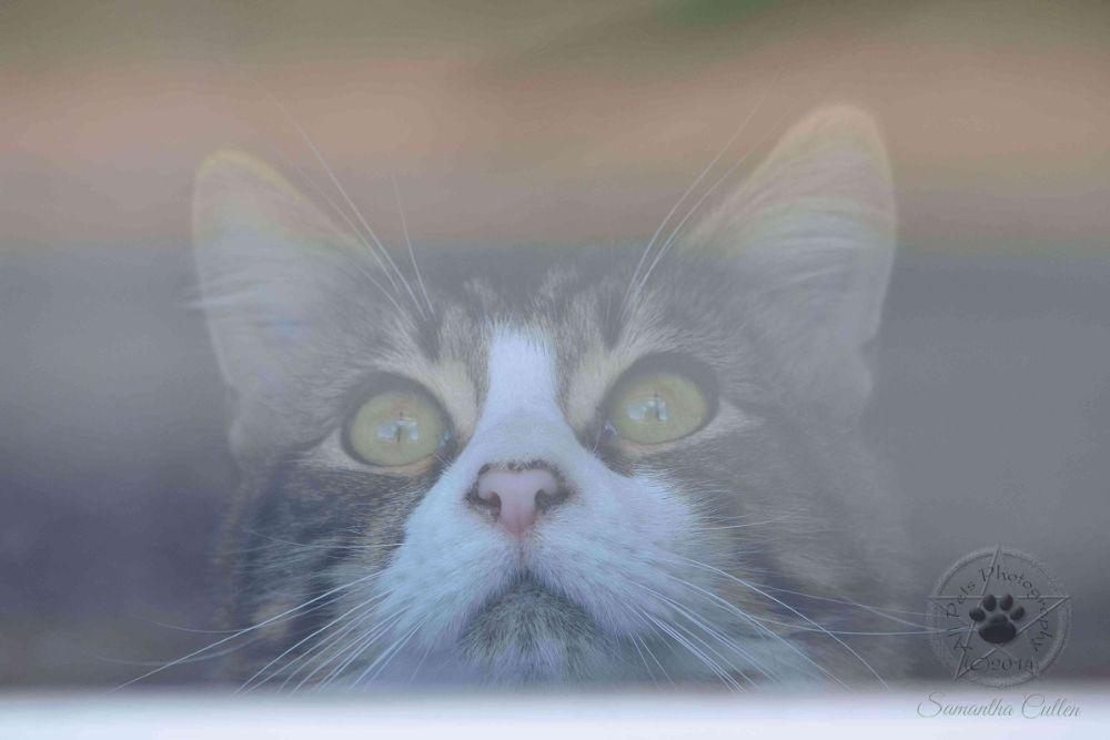 Photo in Animal #cat #kitten #animal #pet #australia