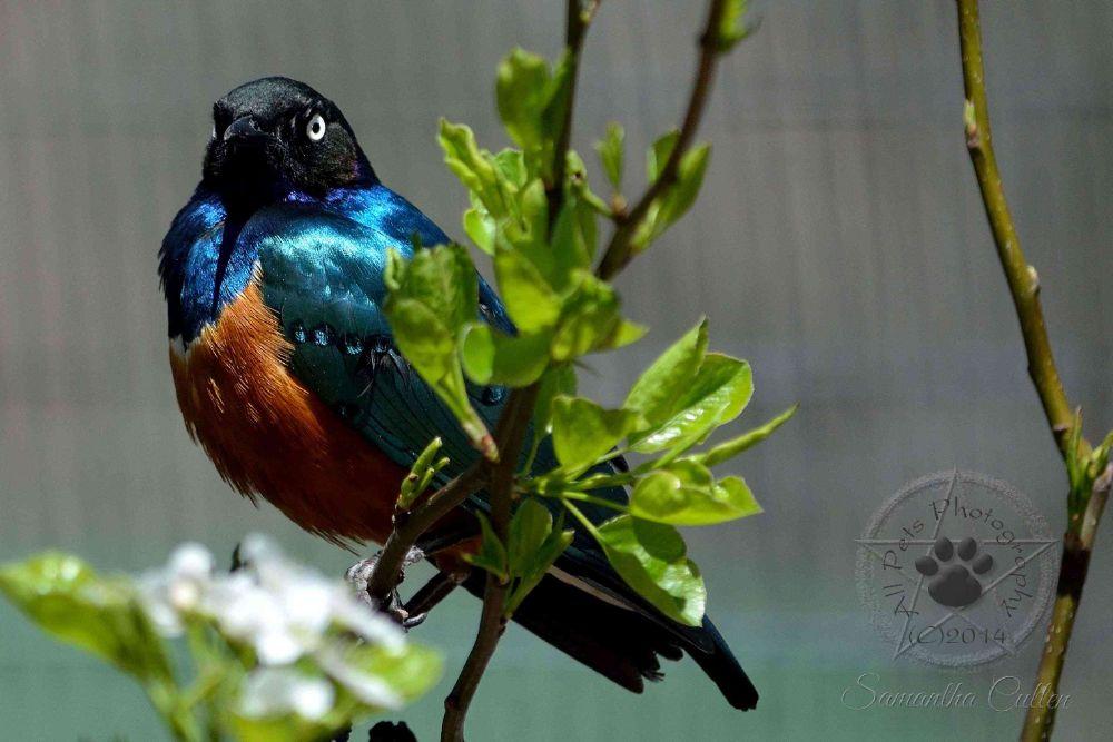 Photo in Animal #usa #america #bird #nature #animal