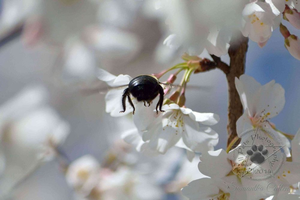 Photo in Macro #bee #insect #nature #usa #america