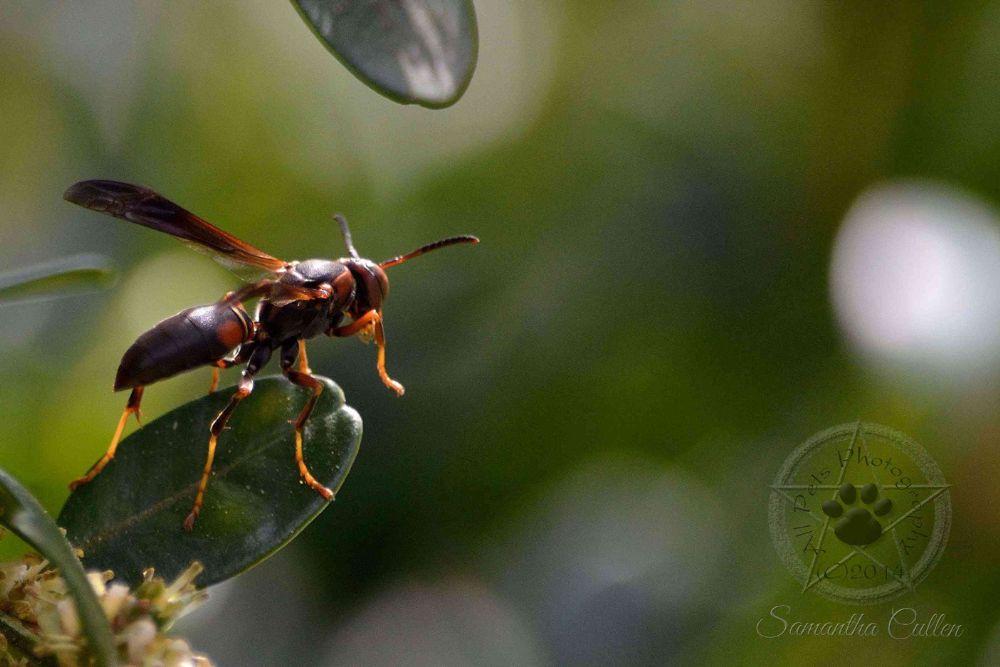 Photo in Macro #wasp #insect #usa #america #macro