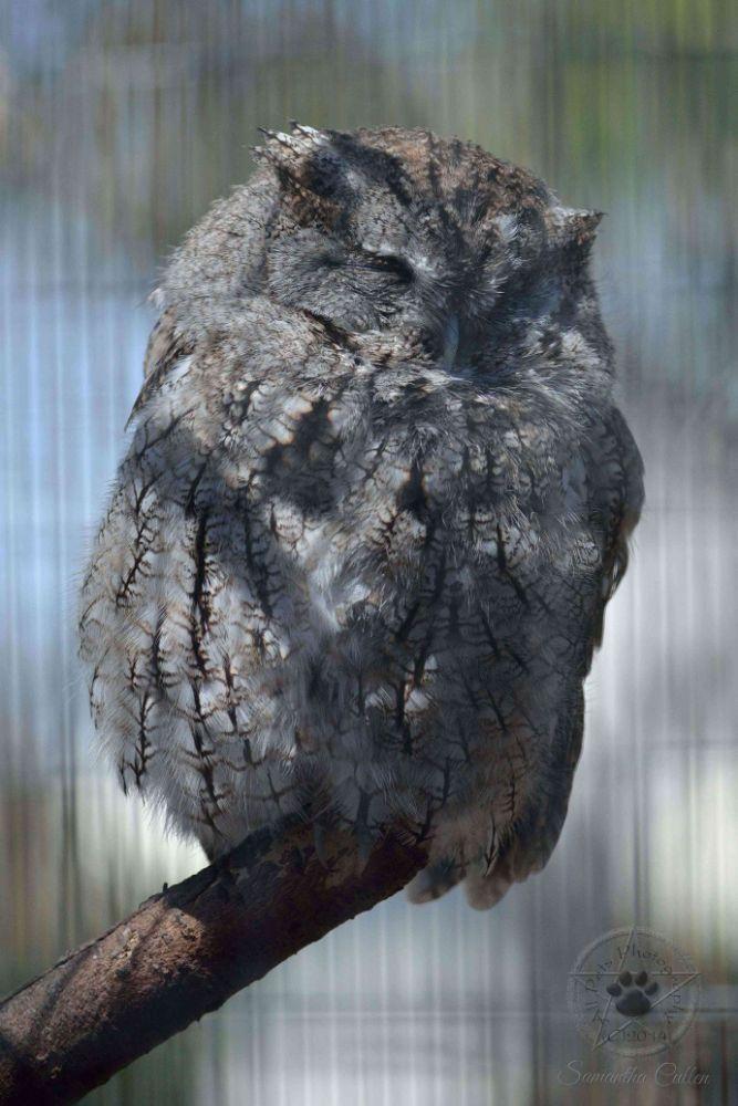 Photo in Animal #owl #usa #america #bird #animal