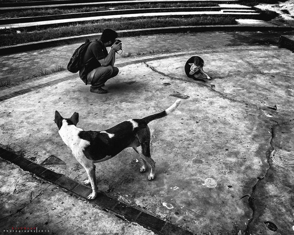 Photo in Street Photography #lifestyle #dog #curious #black and white #street #nikon #d7000 #dhaka