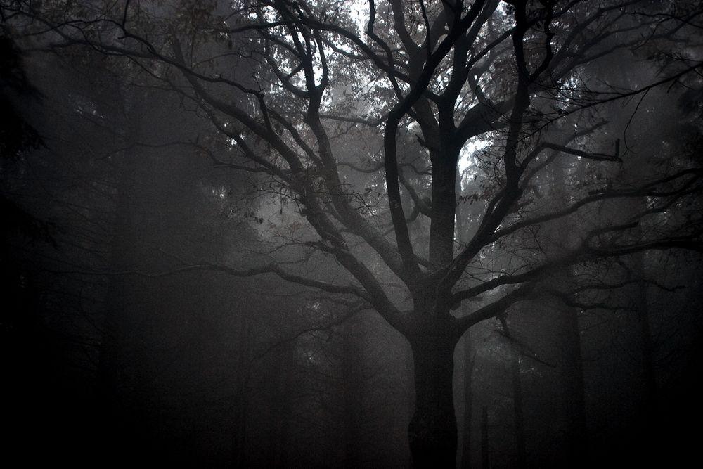 Photo in Landscape #misty woods tree autumn ghostl