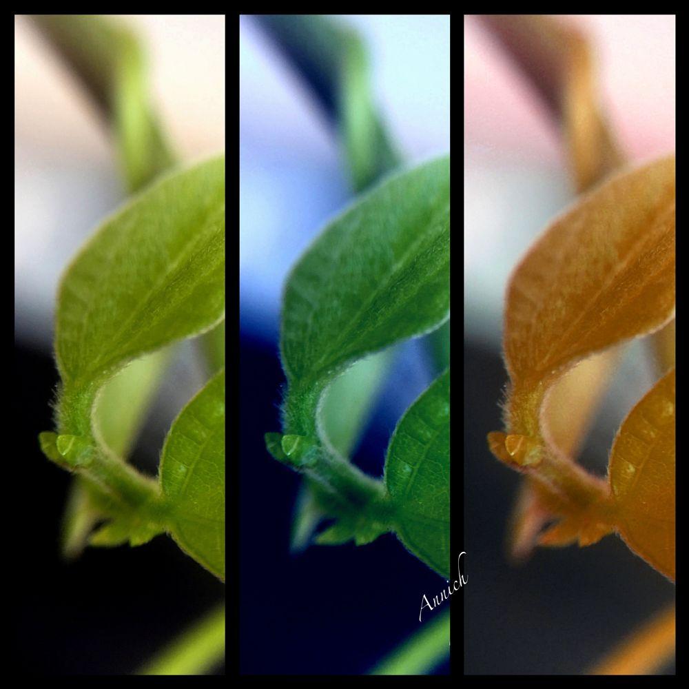 Photo in Macro #leaves #macro #collage